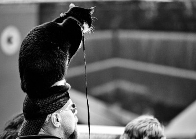 nyc_catman_show